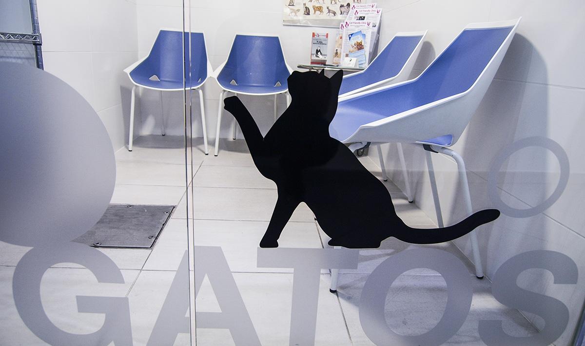 La clínica Veterinaria Albéitar es una clínica en Zaragoza acreditada por la ISFM como clínica amable con los gatos.