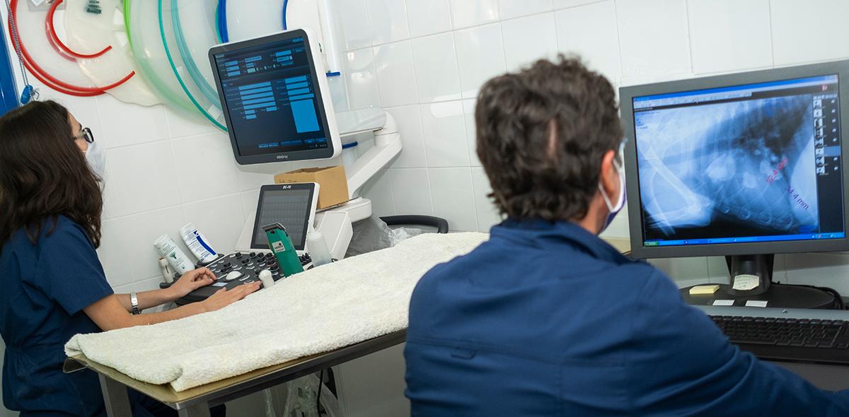 Cirugía de Tejidos Blandos en la clínica Albéitar de Zaragoza